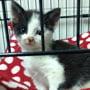 Cute rescue cat