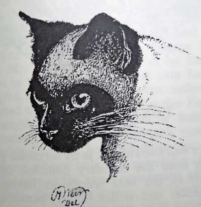 1889 Siamese Cat