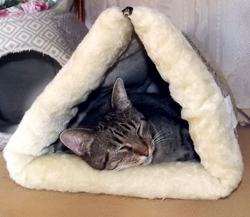 Favorite sleeping spot: self-heating zip up cat bed