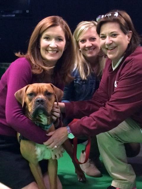 Kendra with George and ladies from Blue Ridge Boxer Rescue