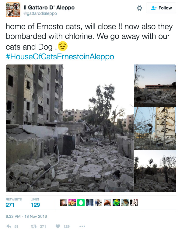 Aleppo cat rescue