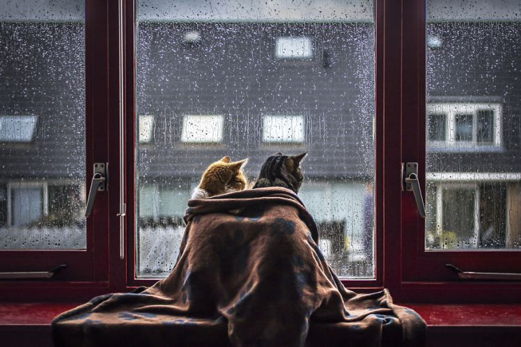 Cat buddies looking out the window as it rains outside