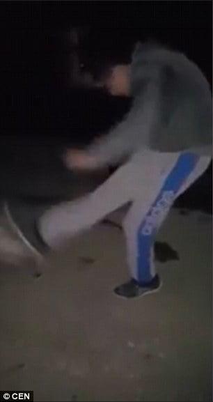 Montenegro cat kicking