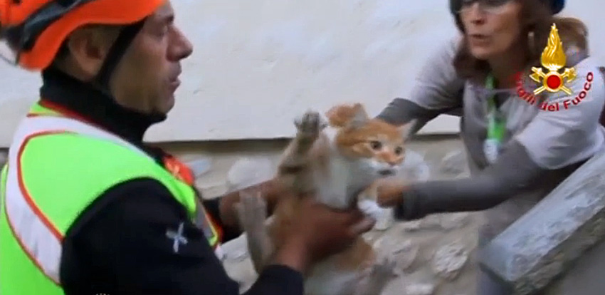 Cat rescue in Italy after quake