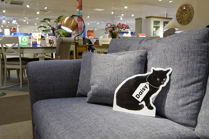 Cat rescue promoted in a furniture store