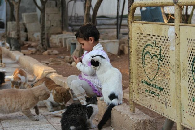 Cat sanctuary in Aleppo