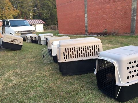 Dogs being prepped for rescue from Bennettsville Animal Shelter