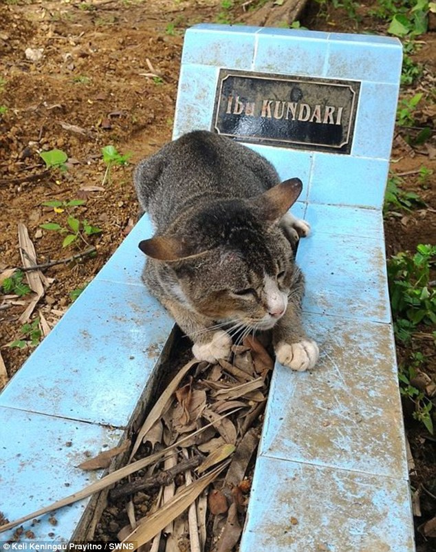 Grieving cat in Central Java