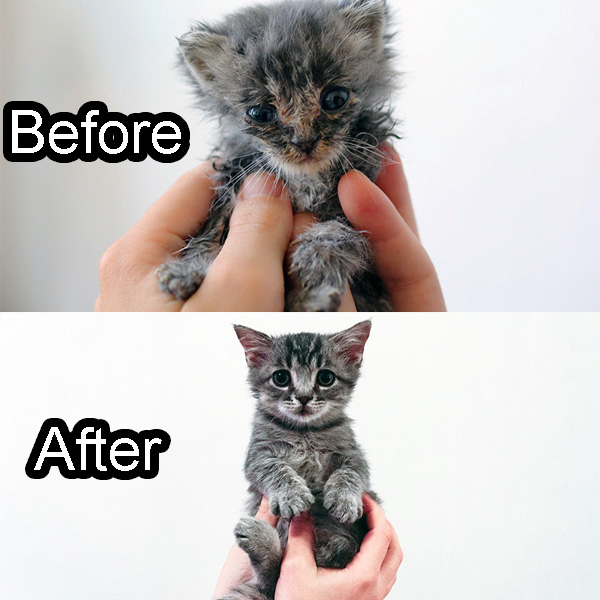 A kitten saved and loved by the Humane Society