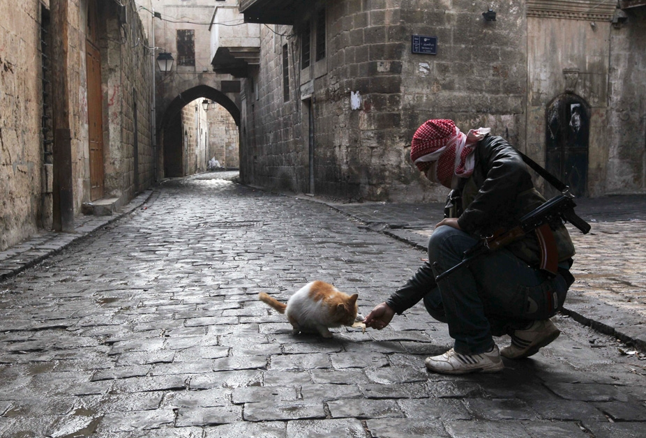 Cat in Aleppo