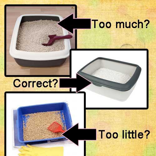Cat litter depth in tray