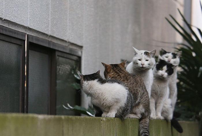 Tokyo stray cats - photo by Masayuki Oki