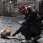 What is happening to Aleppo's animals?