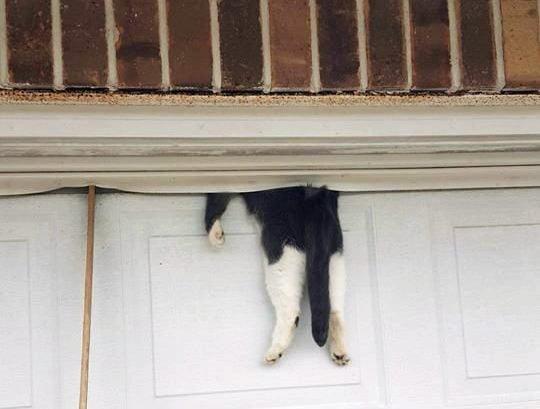 Alarming photo of cat stuck in garage door