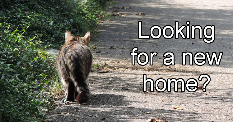 Cat looking for a new home?