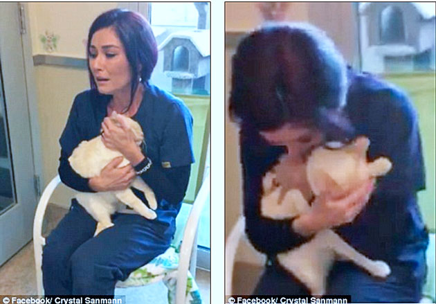 Diego a lost cat reunited with tearful owner Iris