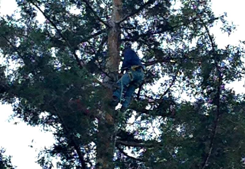 Steve Millosovich tries to rescue cat stuck up tree