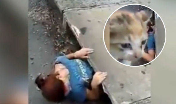 Kitten rescue from drain by brave woman