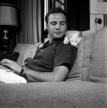 Marlon Brando and white cat.