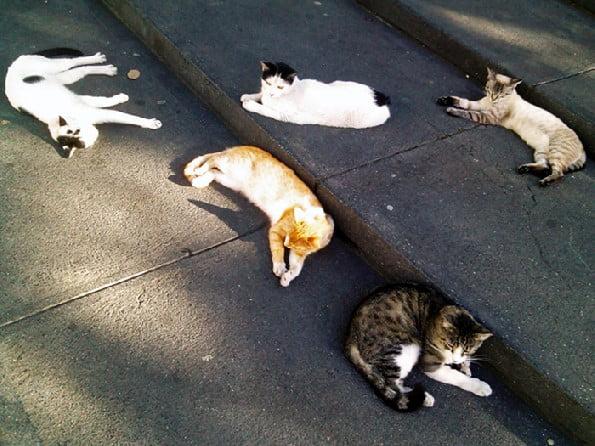 Stray cats of Caracas