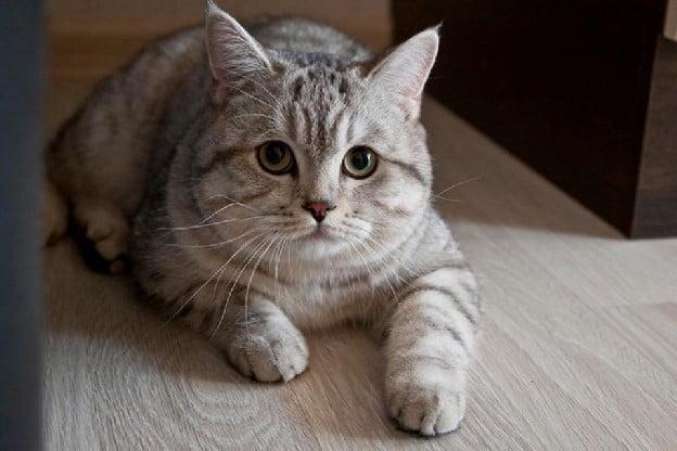 Utkins a psychic cat