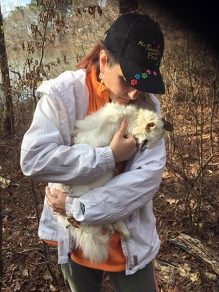person cradles a cat who was abandoned and who died in the wild, attacked by predators