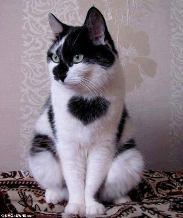 Big-hearted cat, Tommy Tucker