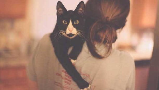 Cat picks up human body language
