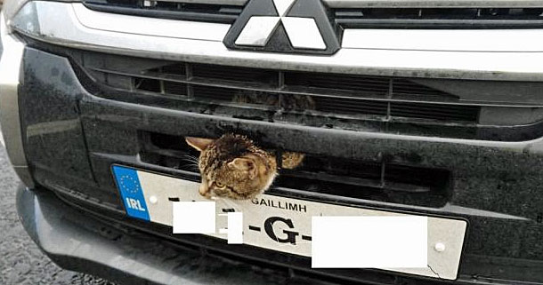 Cat trapped in the grille of a car in Ireland