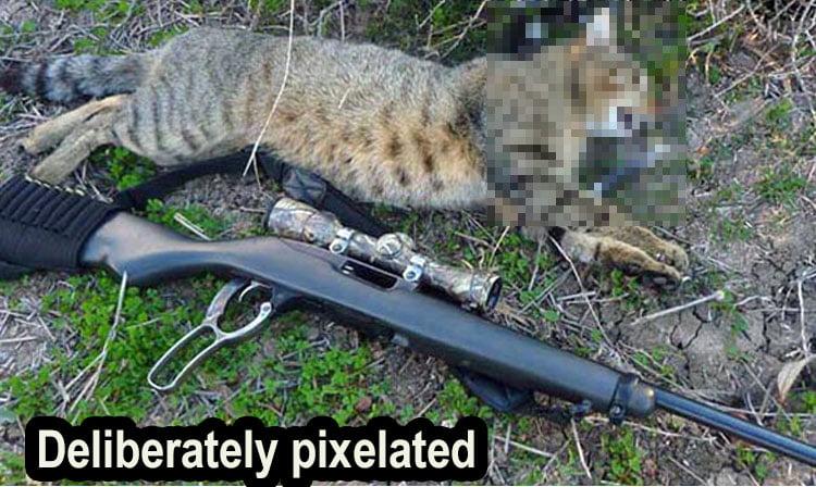Shot cat