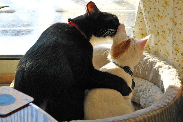 Sociable cat