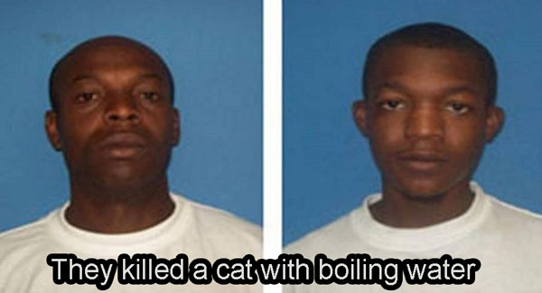 They killed a cat with boiling water