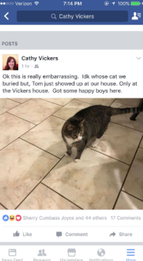 Woman buries wrong cat