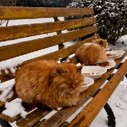 Bejing stray cats