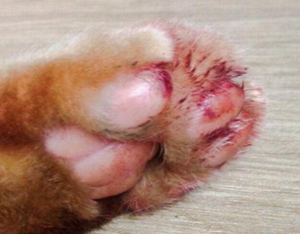 Declawed cat UK