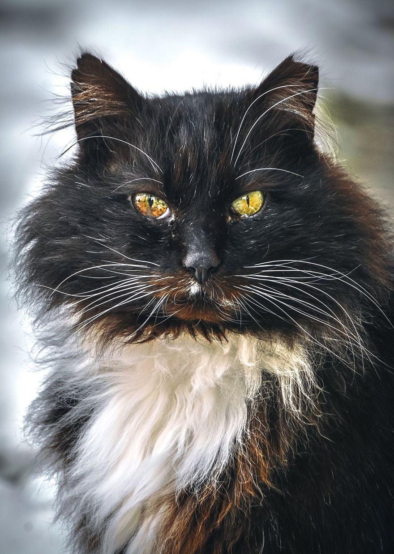 stray cat photographic portrait