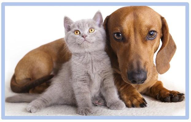 Dogs attitude towards cats