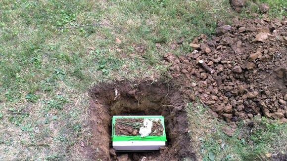 Cat burial