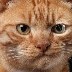 Ten Cat Emotions