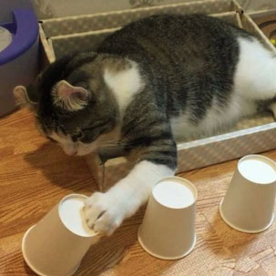 Cat is good at the ball and cup trick