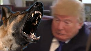 Even animals hate Trump. Author of montage unknown