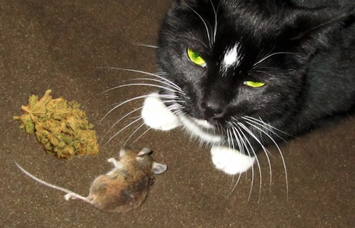 New Zealand cat steals bag of weed