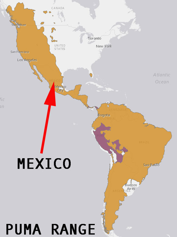 Puma range includes Mexico