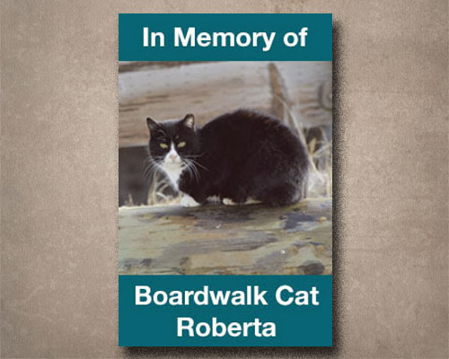 Roberta -- a boardwalk cat