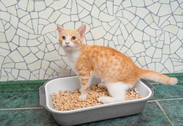 Can cat litter cause allergies?