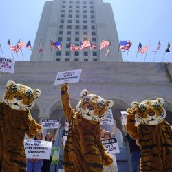 Los Angeles to ban wild animals in circuses