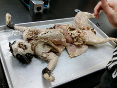 Petition Urges Santa Monica College to Stop Dissecting Pregnant Cats