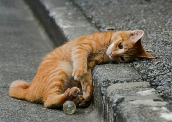 Cat playing on road