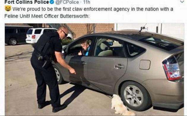 Cat making an arrest