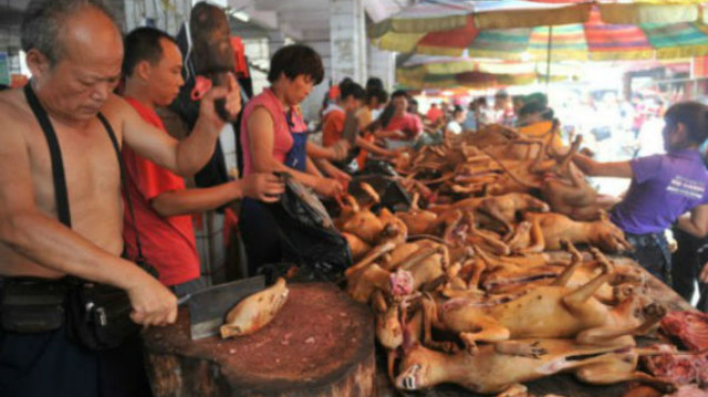 cat and dog meat market